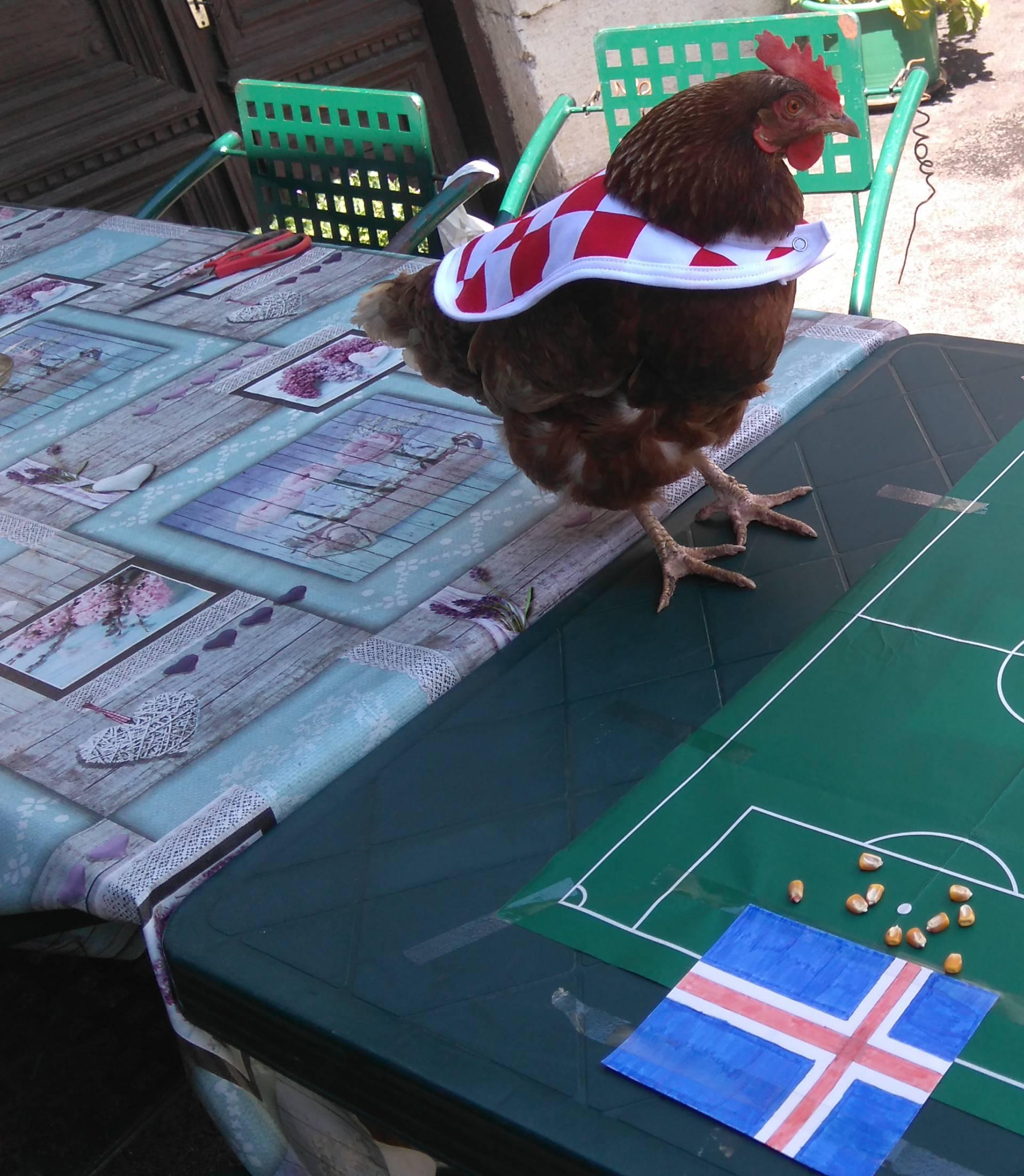 Koka hrvatica je sigurna: Naši 'Vatreni' će pobijediti Island!