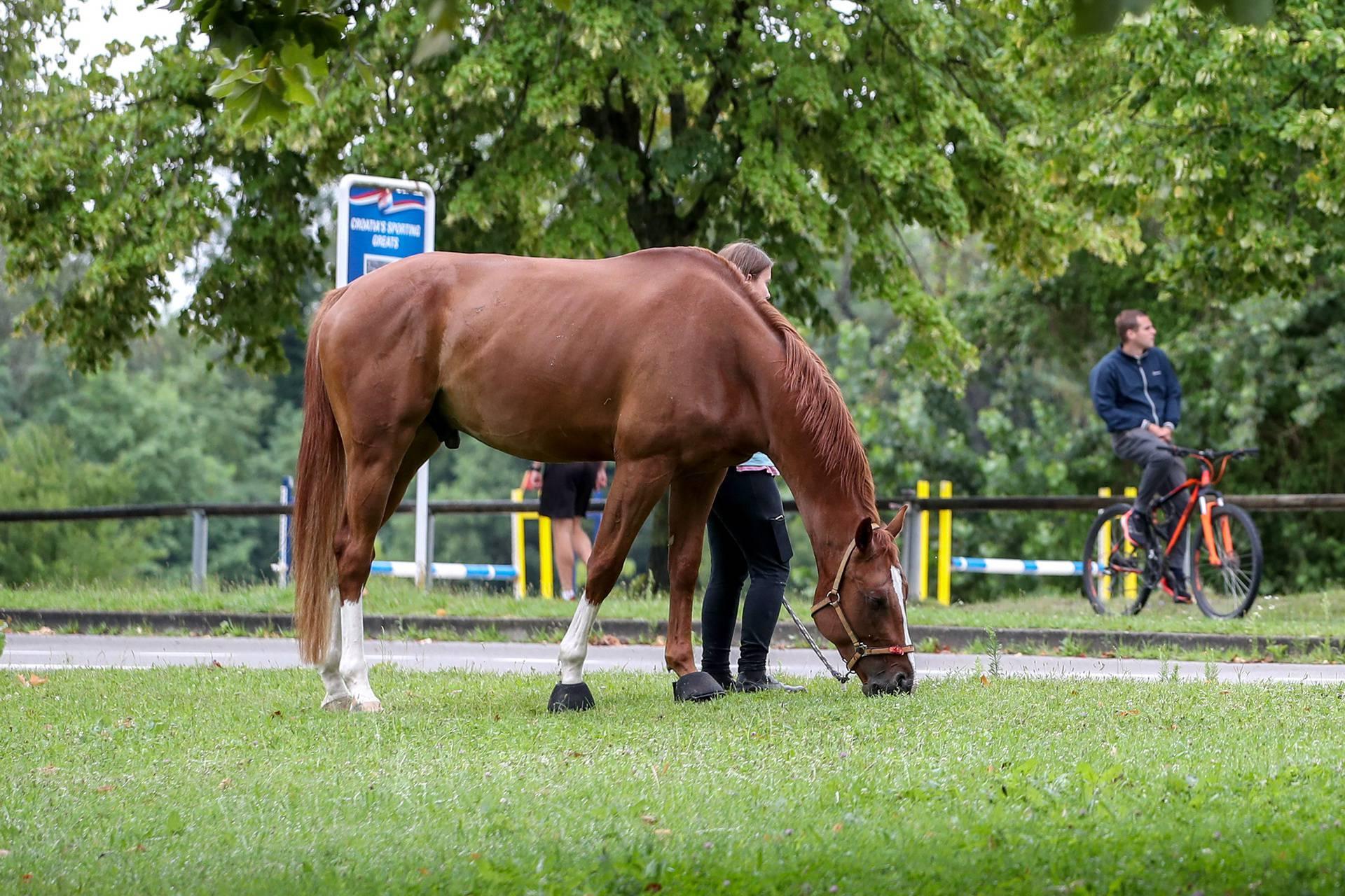 Zagreb: Odvela je konja na šetnju uz jezero Jarun