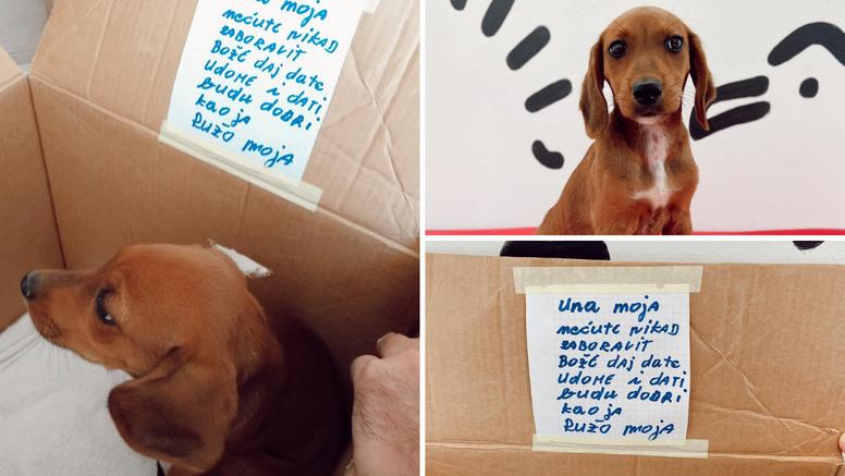 Dirljiva priča napuštenog psića: Gospođa napisala tužnu poruku, malena Ruža pronašla novi dom