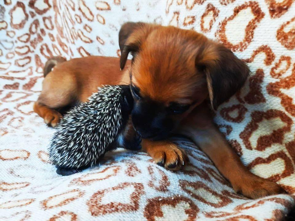 Beba ježić na Trešnjevci utješio kujicu Minnie: Ne boj se, javit će se dobri ljudi i udomiti te!
