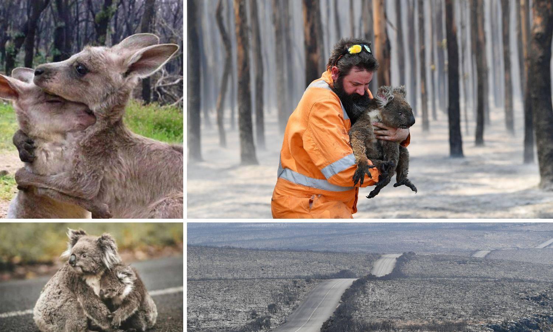 Dom koala prije i poslije požara - pakao ga je potpuno izbrisao