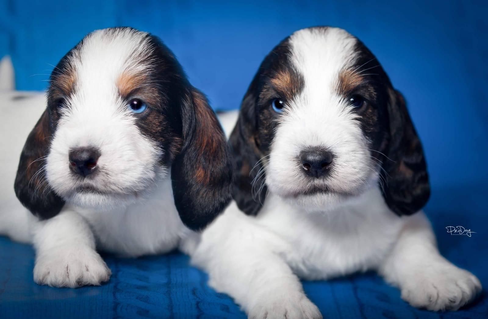 Dva brata s dva plava oka: ali svakom po jedno, lijevo i desno!