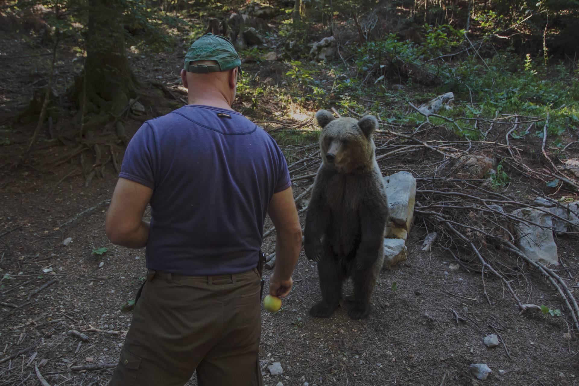 Šaptač medvjedima iz Mrkoplja: Čekaju me uz cestu i jedu iz ruke