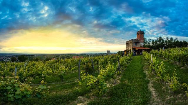 Pogled s Daruvarske vinske ceste – Vezmarova kula