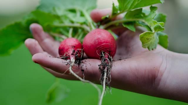 Je li organska hrana samo marketinški trik? Testirali su i saznali