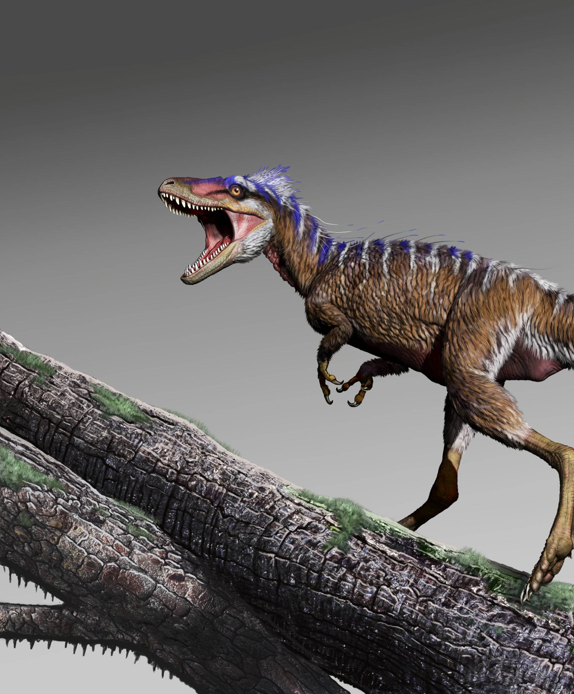 Cretaceous Period dinosaur Moros intrepidus whose fossils were unearthed in central Utah in this artist reconstruction