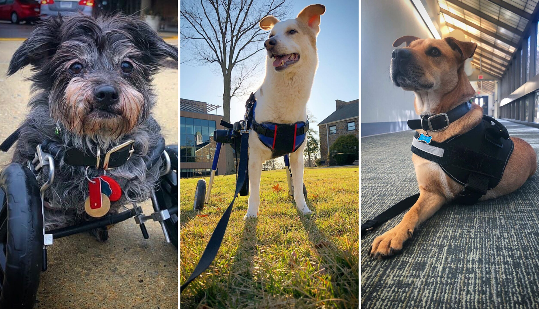 Brine o tri psa koji imaju svaki po dvije noge: 'Oni su heroji...'