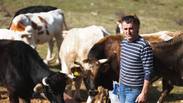 Zbog spora oko livade susjed mu ubija krave? 'Gazi ih autom, a Šaronju je napao sjekirom'