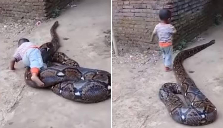 'Srećom je zmija sita': Dječak gnjavi pitona, odrasli se smiju