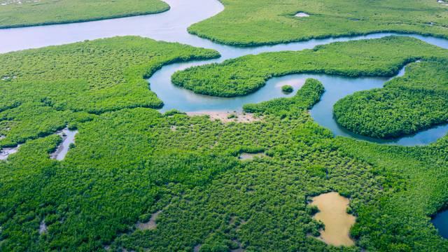 Krčenje prašuma u Amazoniji od 2008. poraslo na najvišu razinu