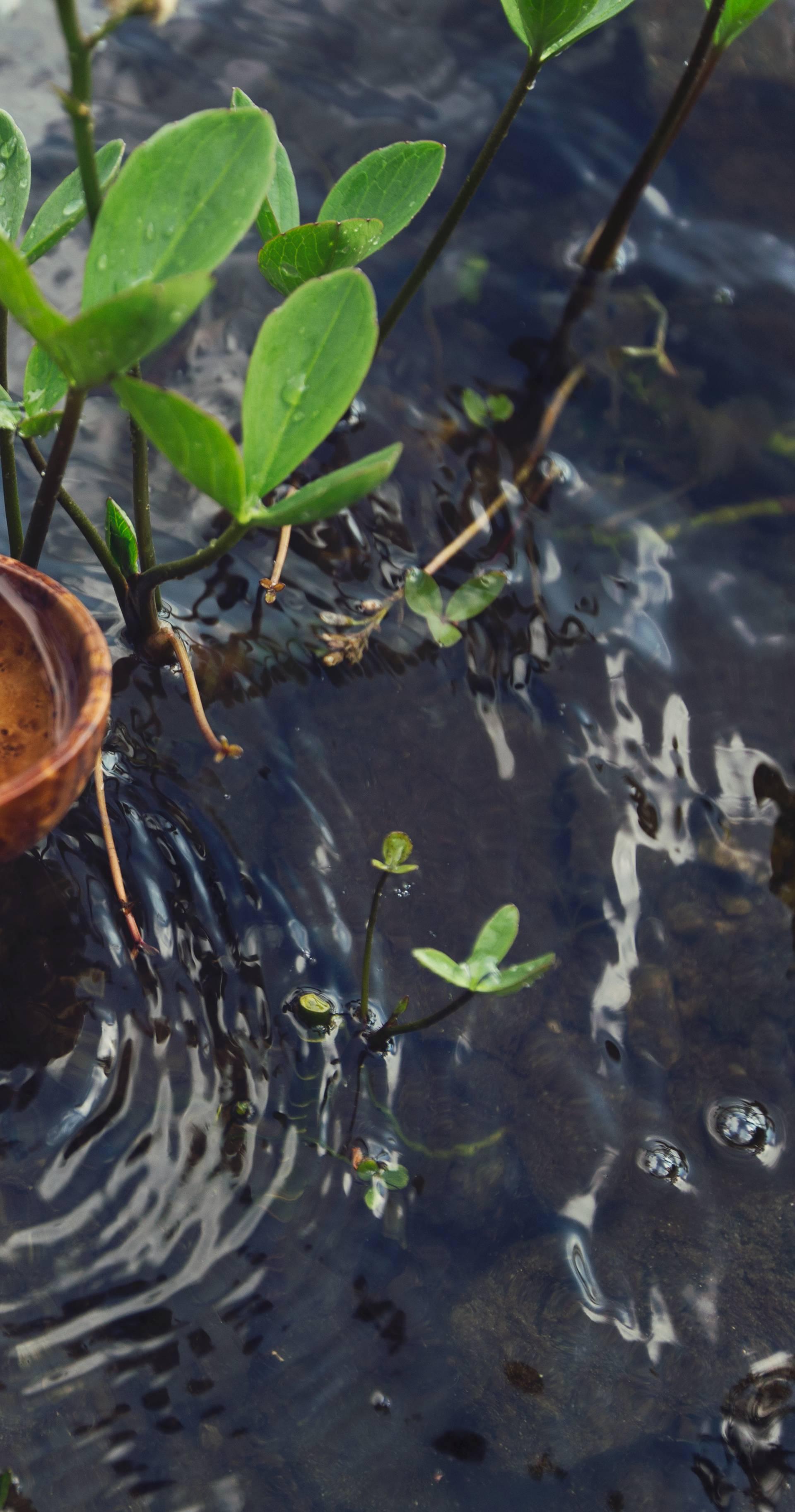 Povežite se s prirodom na 5 jednostavnih načina