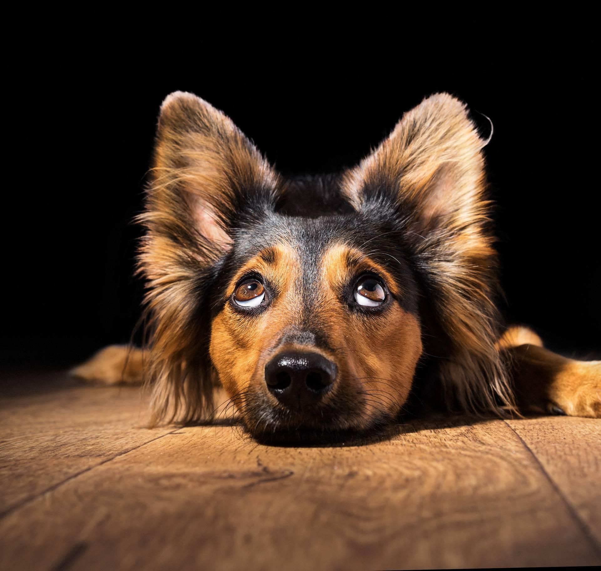 Znate pogled koji pas ima kada nešto zezne? To nije krivnja
