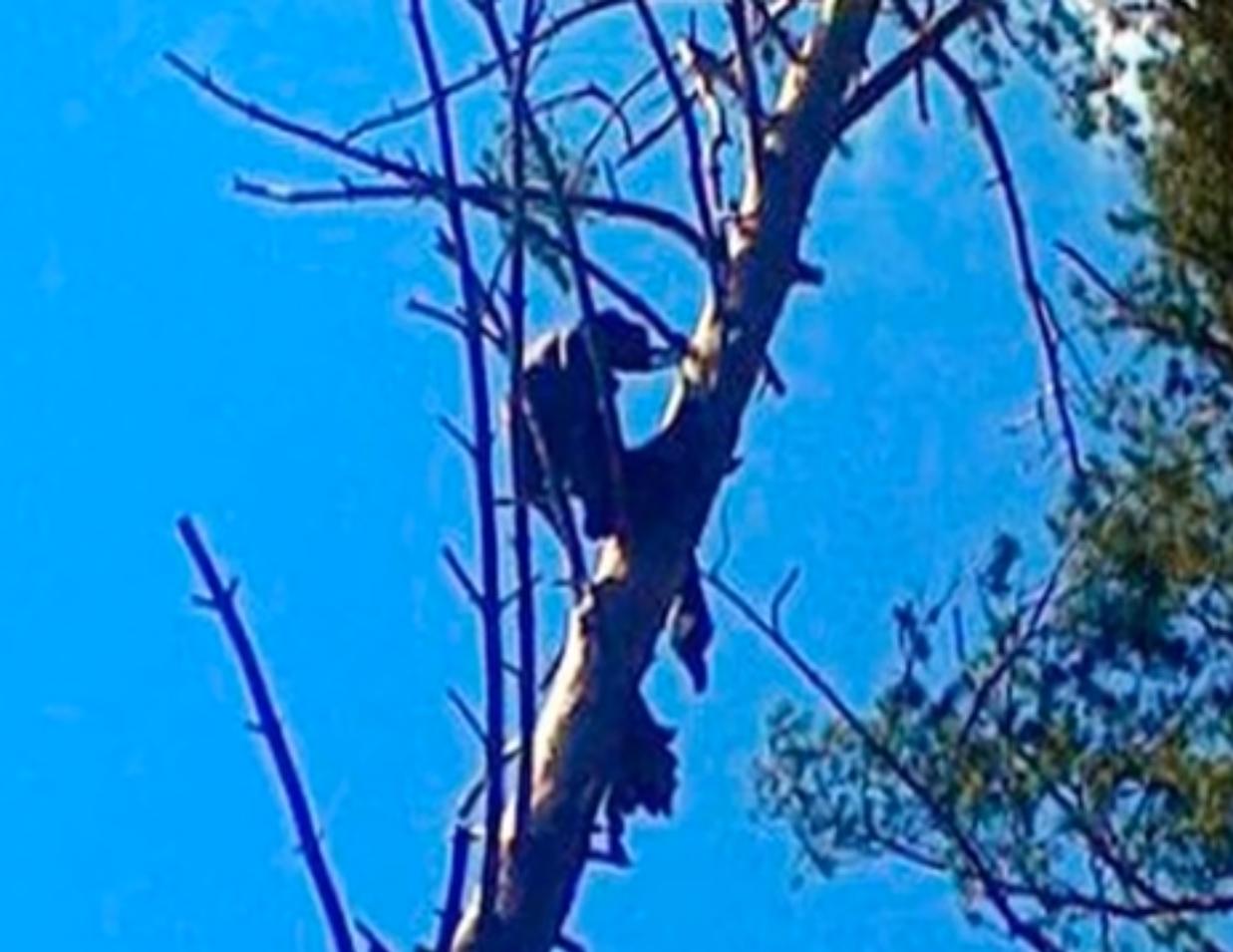 Misteriozna smrt: Nakon osam mjeseci našli ga na vrhu stabla