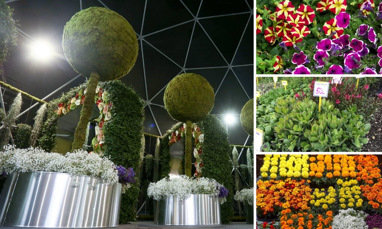 Floraart: Na Bundeku  cvijeće košta po tri, a čempres 437 kn
