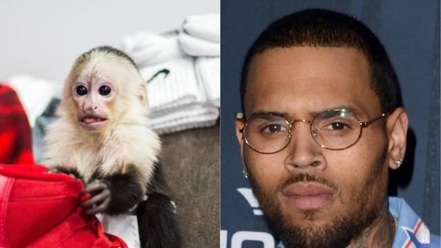 Chris Brown bi mogao u zatvor jer ima majmuna za ljubimca