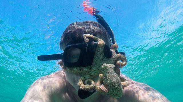 Hobotnica mu se zakačila za masku u moru kraj Šibenika
