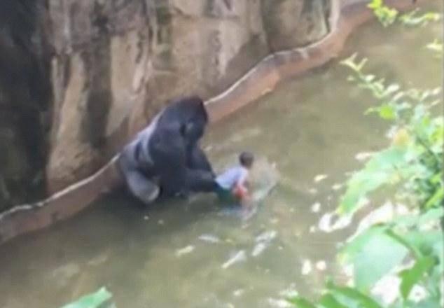 Pojavila se nova snimka: Gorila nemilosrdno povlači dječaka...