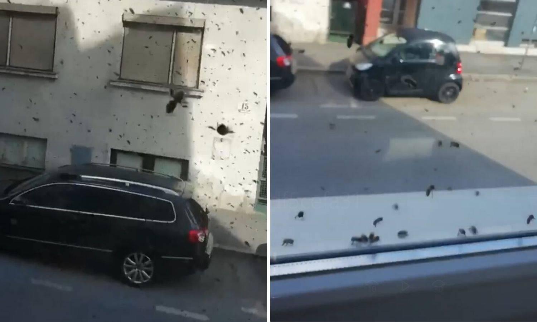 'Veliki roj pčela letio je ulicom, ubrzo su stigli ljudi u žutom'