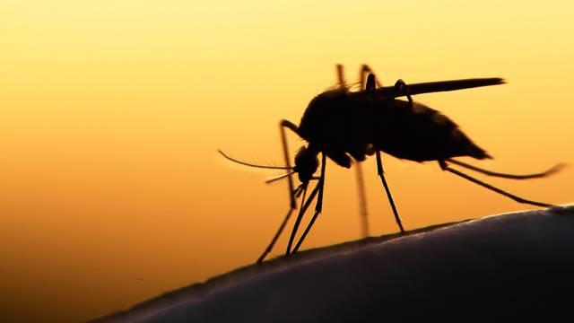 Opaka bolest Zapadnog Nila od koje je preminula Mira Furlan: 'Ljudima se ni ne jave simptomi'