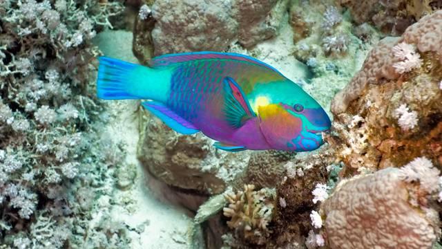 Klimatske promjene potiskuju morske vrste prema polovima