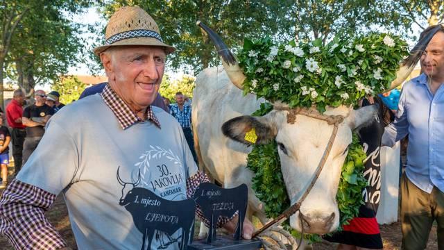 Kanfanar: Na jubilarnoj 30. Jakovlji otvoren Park istarskog vola
