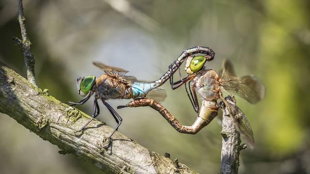 10 stvari koje možda ne znate o kukcima: Pauci su uvijek tu...