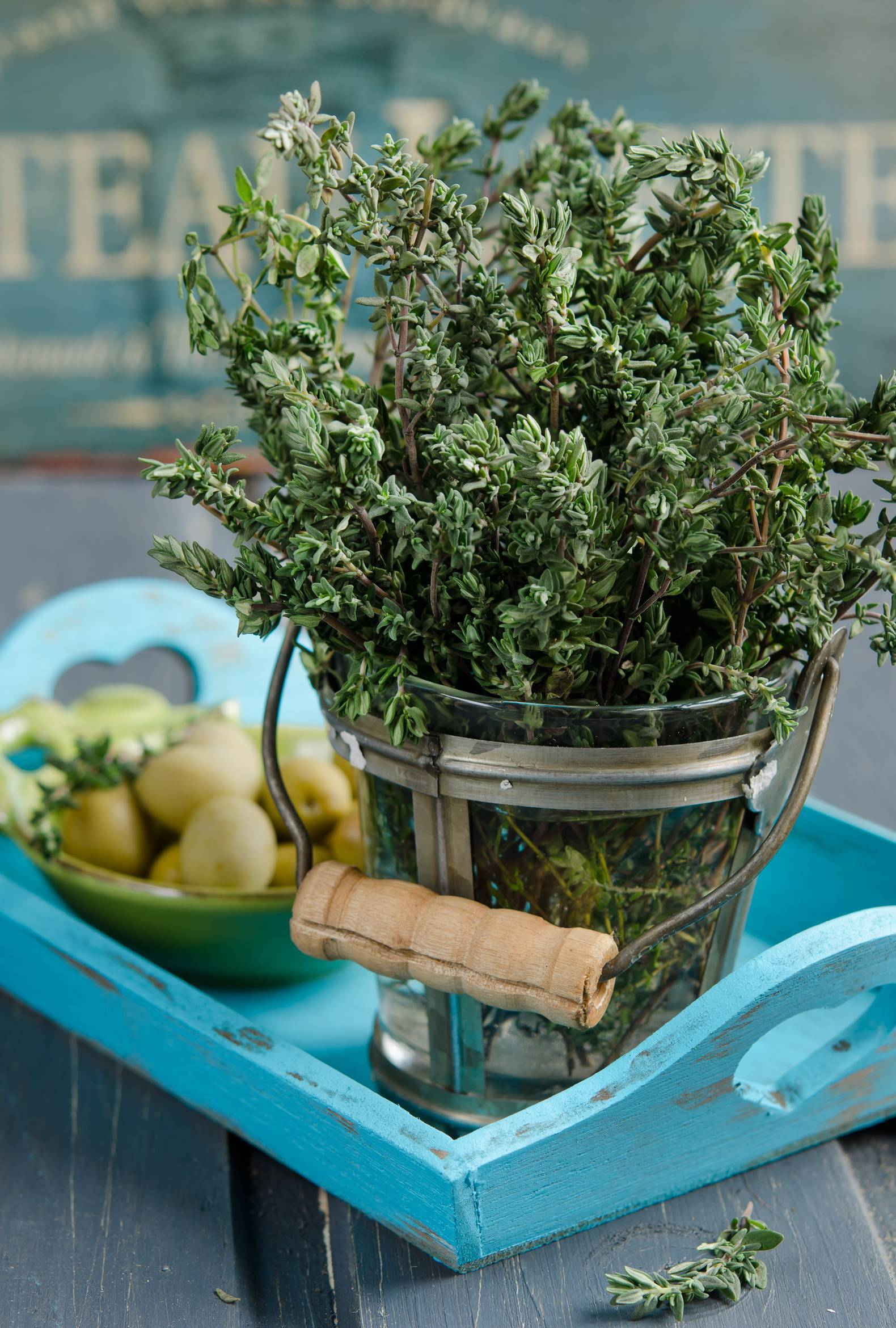 Thyme herb plant in a vase