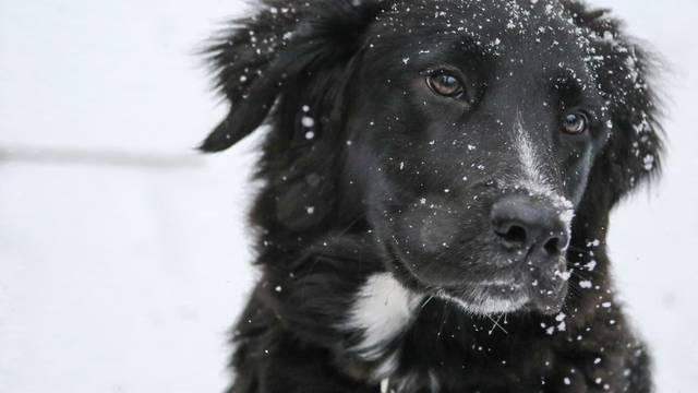 Zima topla svima: Doniraj deke i pomozi šapicama iz Dumovca