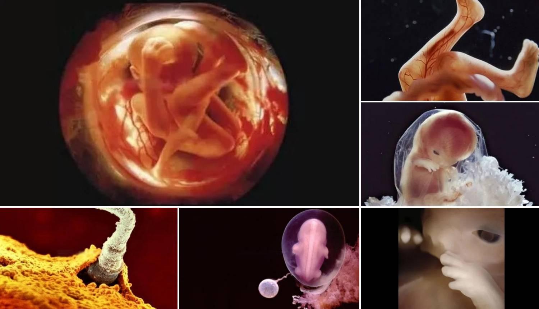 22 nevjerojatne slike razvoja čovjeka - od začeća do rođenja