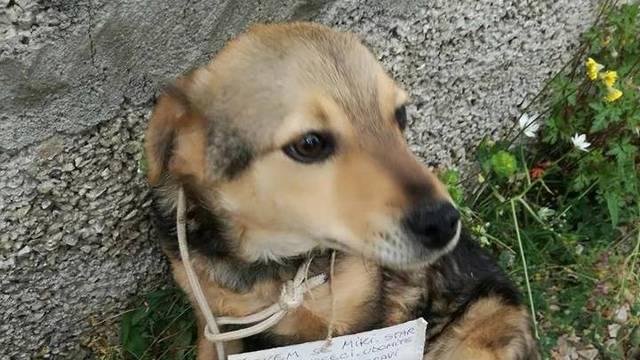 Sramota u Primoštenu: Psića ostavili s ceduljicom oko vrata