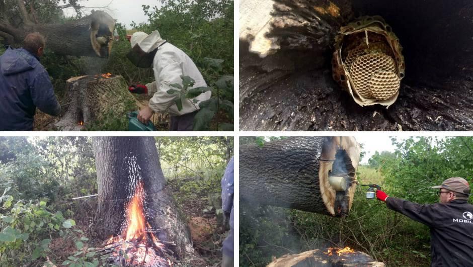 Lovci na stršljenove: 'Gnijezdo je bilo dugačko čak 1,5 metara'
