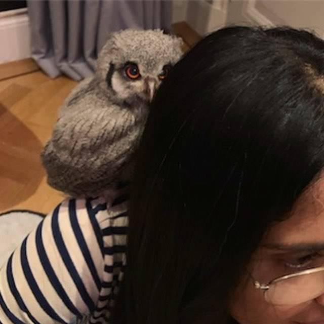 Udomila sovu: Salma Hayek se pohvalila novim članom obitelji