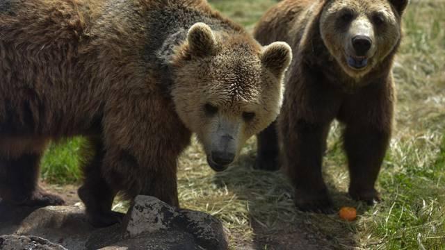 Udruga za zaštitu životinja Four Paws  zbog Macolinih medvjeda prekida suradnju s Hrvatskom