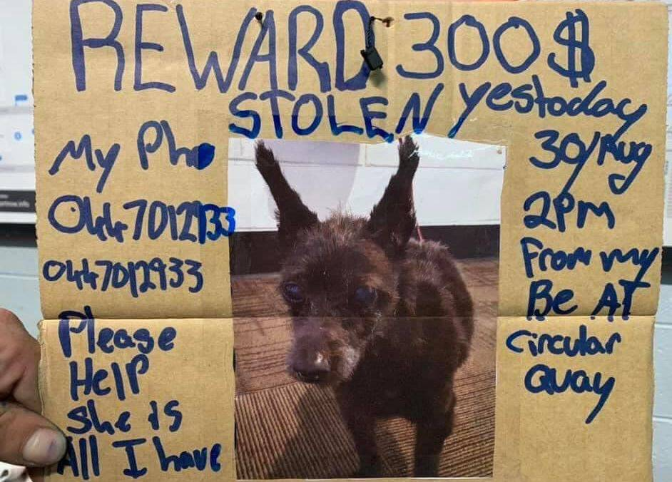 Beskućniku ukrali voljenog psa, on nudi sve što ima da ga vrate