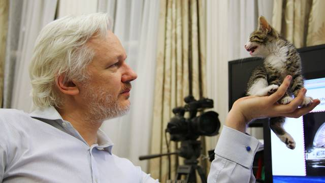 WikiLeaks founder Julian Assange holds up his new kitten at the Ecuadorian Embassy in central London, Britain