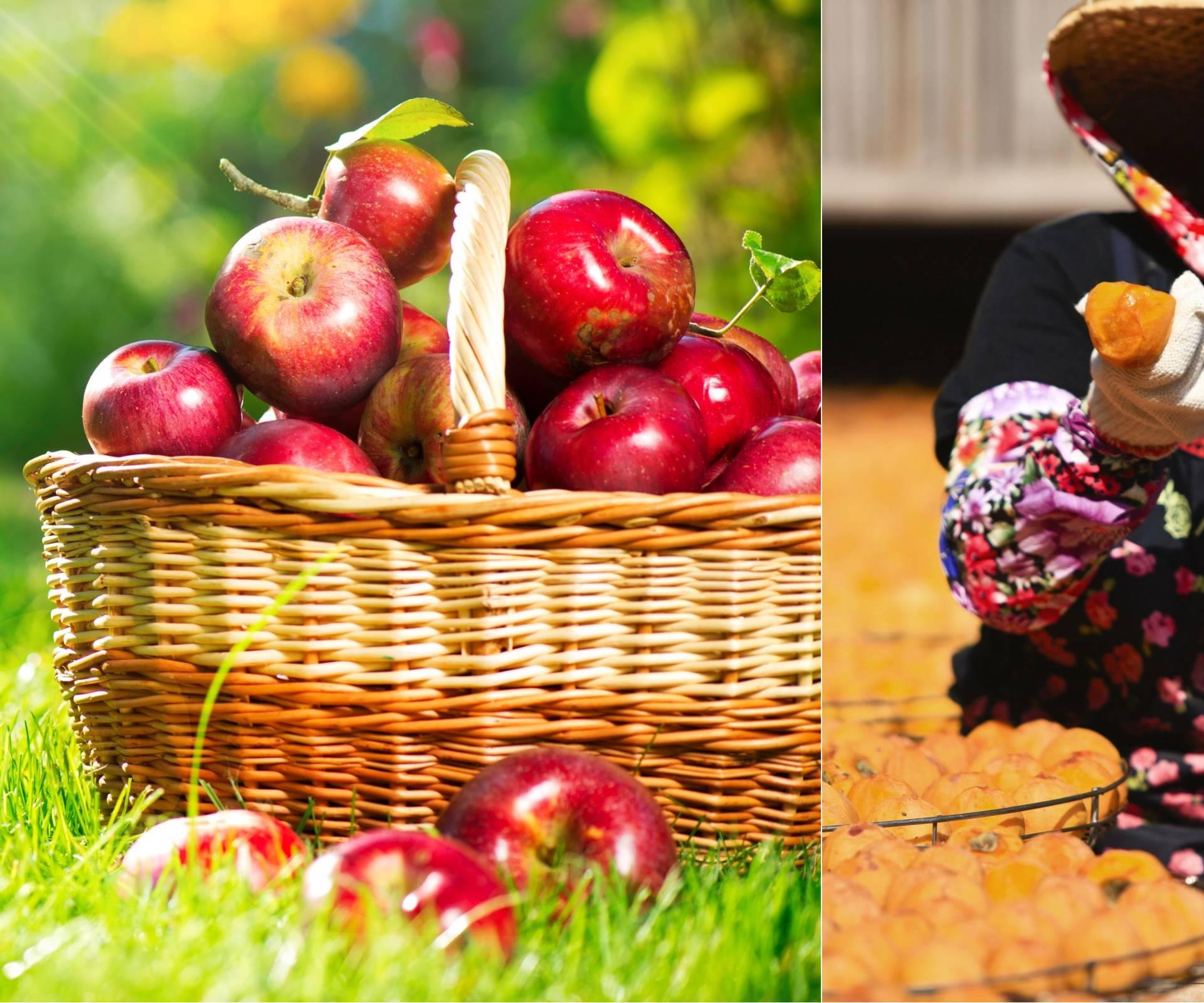 Najkompletnija je: Naša jabuka čuva probavu bolje od japanske