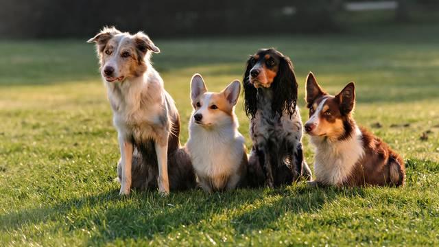Ovo su najpametnije vrste pasa -  je li i vaš možda među njima?