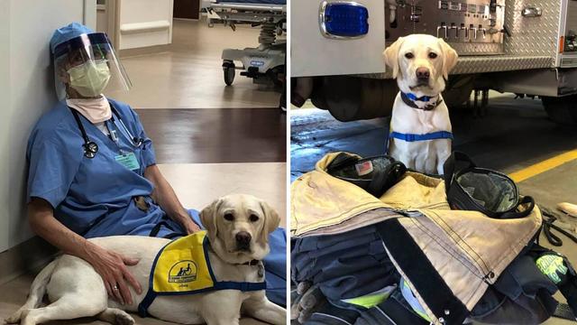 Pas usrećuje umorne doktore: 'Igranje s njom nas smiruje...'