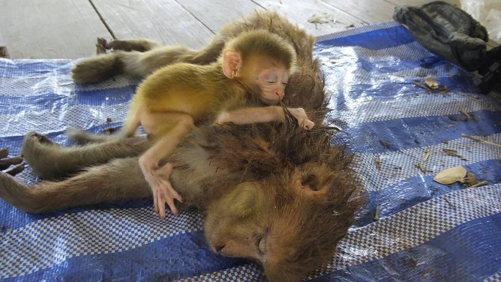 Facebook.com/WildlifeFriendsFoundation