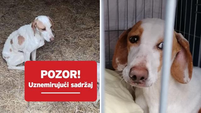 Strašan video kod Knina: Našli izgladnjele lovačke pse, jedan uginuo, drugog uspjeli spasiti