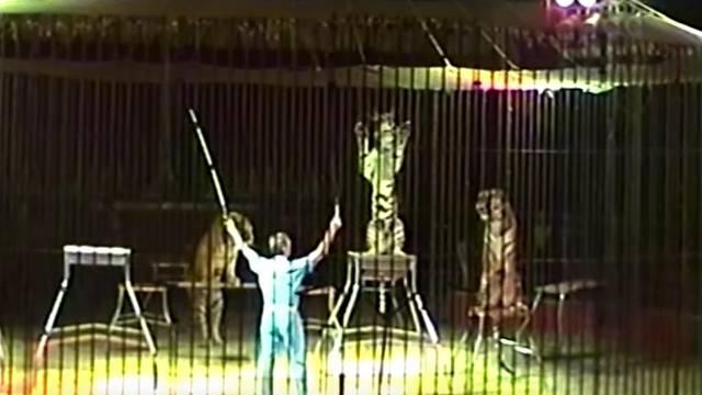 Vježbao točku s tigrovima, oni ga rastrgali: 'Ipak su oni divlji'