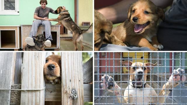 Korona donijela lijepe vijesti za Dumovec: 'Prošle godine imali smo tri puta više pasa na brizi'