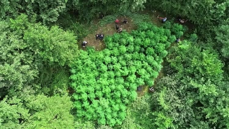 U šumi kod Samobora otkrili plantažu marihuane, traže tko se dobro brinuo o svojoj 'travi'
