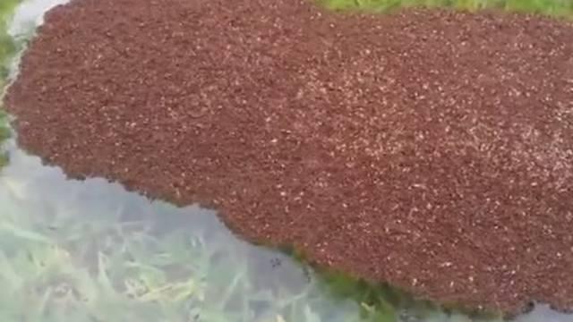 Kao da im poplave nisu dosta: 'Ne dirajte mrave, ubit će vas!'
