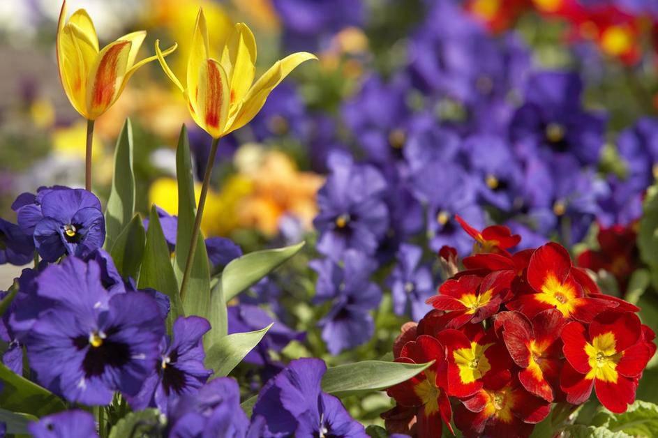 7 biljki koje će oplemeniti svaki balkon -  i kako ih trebate paziti