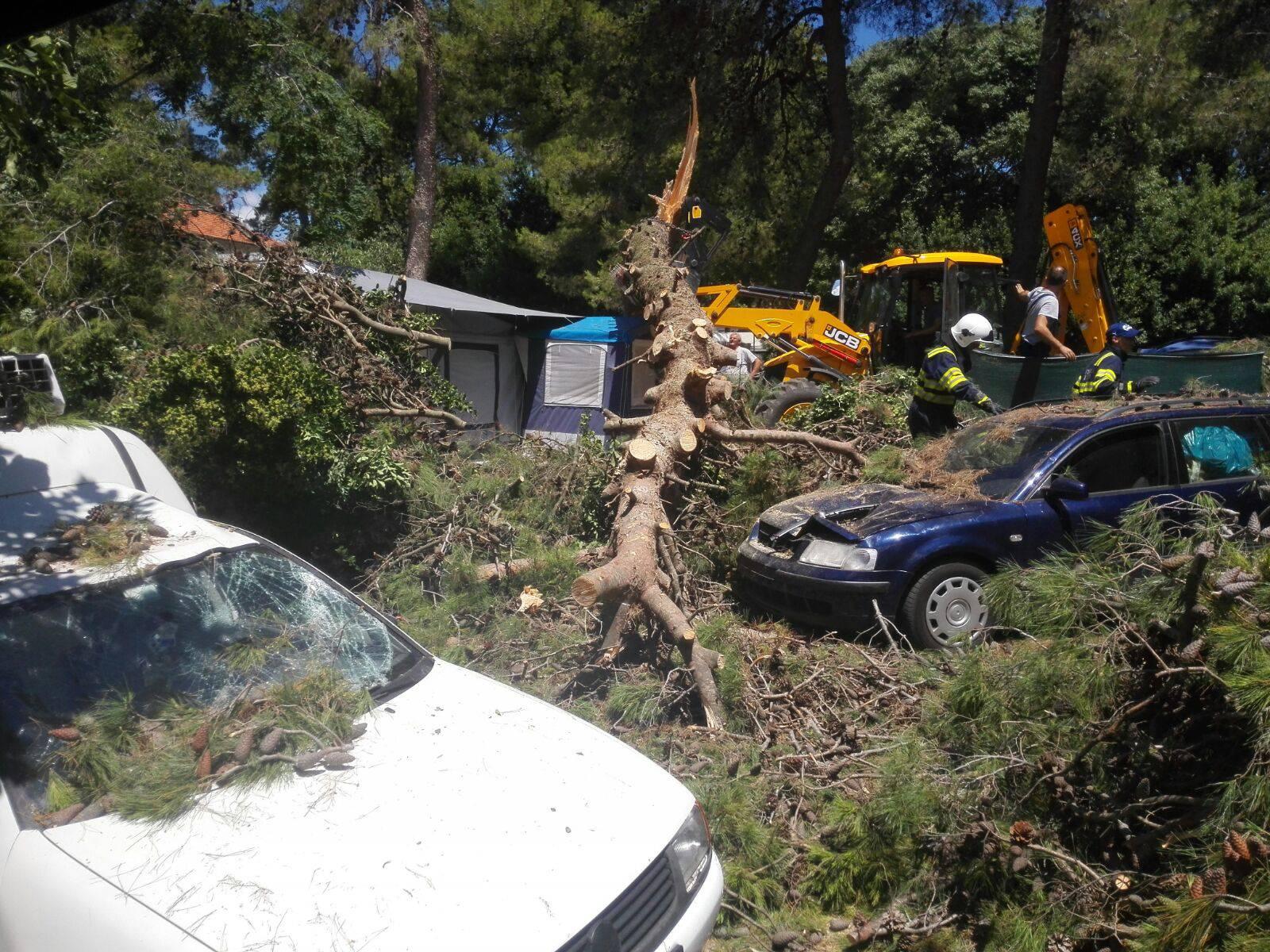 Srušilo se stablo  u autokampu: Grana je ozlijedila dvoje djece