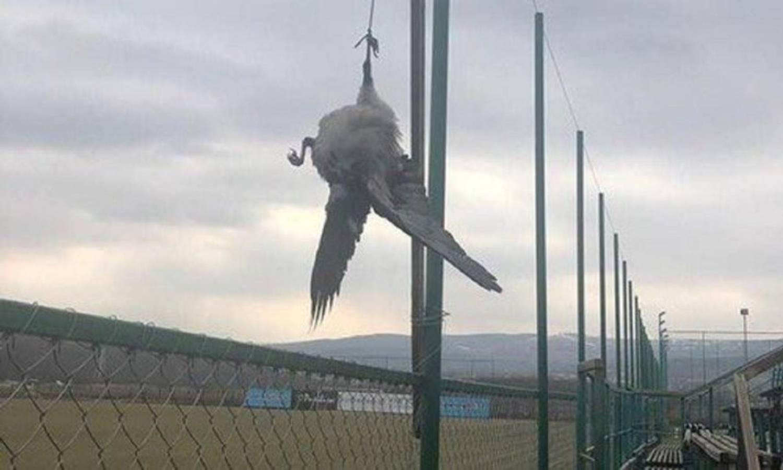 Svi su zgroženi: Rumunji ubili i objesili četiri vrane kraj terena