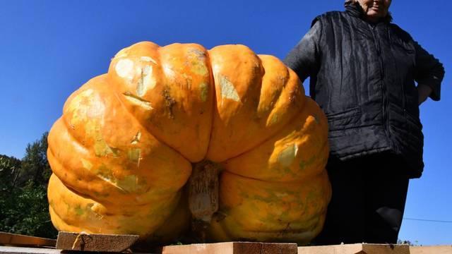 Eminovci: Milka i Vid Kartalija uzgojili su bundevu tešku 120 kilograma