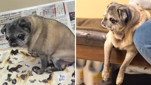 Bolesnog psa ostavila je pokraj smeća: Zbog toga ide u zatvor