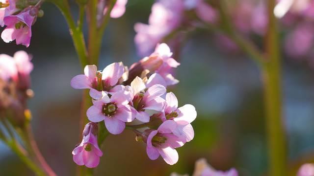 Povratak u prirodu: Početak sezone početak je radova u vrtu